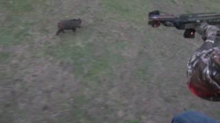 Смотреть онлайн Охота с мощным арбалетом на кабана