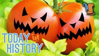 Tomatoes - Plant Toxicity
