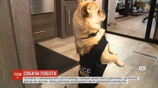 У штаті Флорида поліцейський пес відповідає за зв