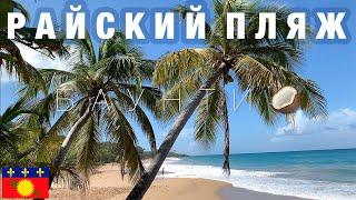 Райский пляж: пальмы, кокосы. Красивая Гваделупа. Карибское море отдых и приключения на видео 4K
