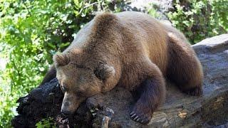 Now You Can Kill Hibernating Bears, Congress Passes Law