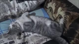 Кошачий влог:) Счастливый Кузя))