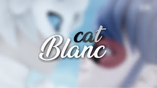 miraculous cat blanc moments that made me scream