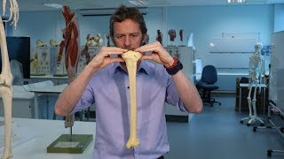 The Tibia