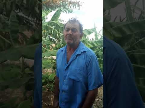 Grande cantor da cidade de Betânia do Piauí.