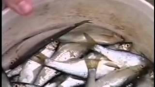 Рыболовные принадлежности фирмы герман