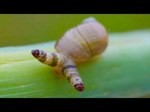Isang lunas para sa mga worm pahiwatig