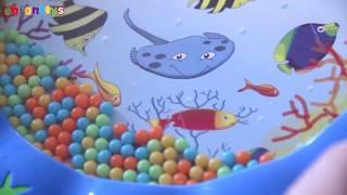Tambourin aquarium
