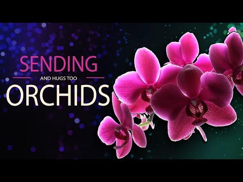 ✅Sending orchids and Hugs too✅Best Wishes especially for you!