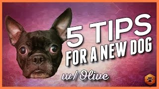 Bringing Home a New Dog - 5 Tips from Olive's first week
