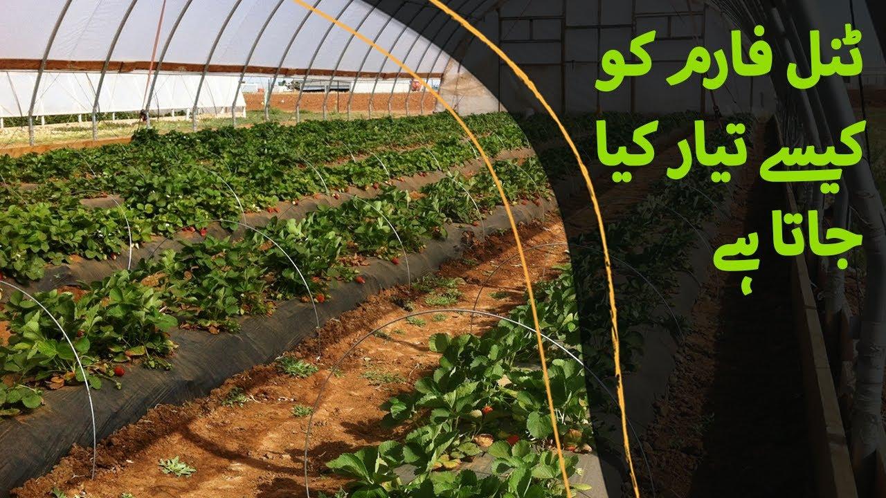 Soil Preparation for Nursery Raising - Nursery ke liye Zameen Ki Tiyari - نرسری کے لیے زمیں کی تیاری