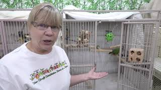 Cage Bound Senegal Parrot for Adoption at Ginger's Parrot Rescue - Jasmine