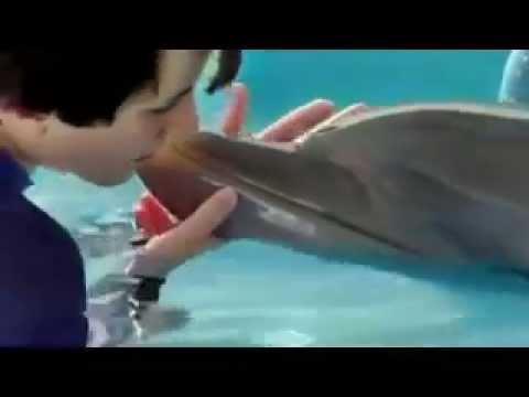 Dolphin Tale 2 (Clip 'Shoo Rufus')