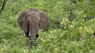 Elephant Poaching on rise in Kruger National Park