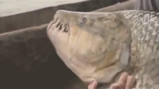 Ужасный улов!!!шокирующие рыбы!