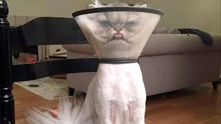 There's absolutely nothing funnier than cats - Funny cat compilation