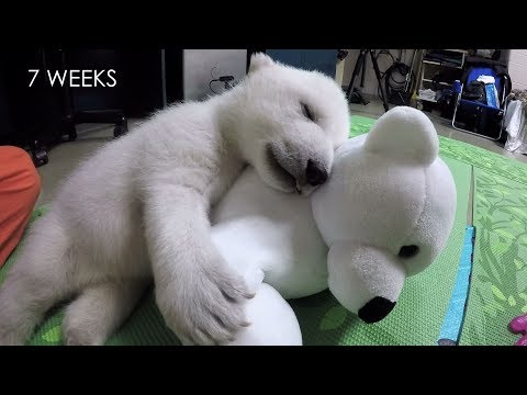 Watch This Happy Young Polar Bear in Her Formative Years