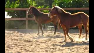 Wild Horses in Training w/ Protect Mustangs.org Turnout