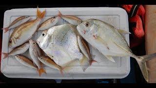 Pancing & masak Port Dickson: GT, Daun Baru Masak Lemak