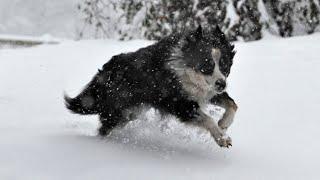 Snow turns UK into winter wonderland