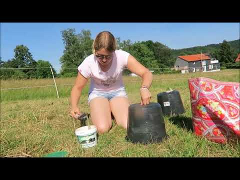 How to build a horsefly trap with a black bucket