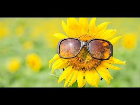 Szemüveg fotó a látáshoz