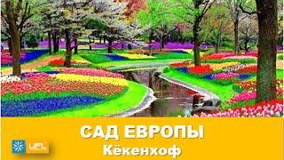 Королевский парк тюльпанов Кёкенхоф в Голландии. Сад Европы Нидерланды