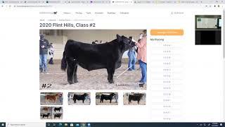 2-25-21 Livestock Judging Basics - Market Steers