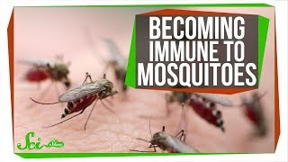 The Secret to Becoming Immune to Mosquito Bites