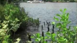 preview picture of video 'Vörder See - ein Sonntagsspaziergang in Bremervörde'