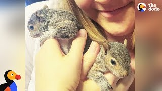 Rescue Squirrel Visits Rescuers with Her Babies | The Dodo