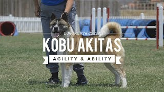 ALL ABOUT THE AMERICAN AKITA