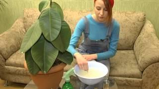 Растут, как на дрожжах! Как спасти домашнее растение?