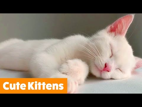 Adorable Funny Kittens | Funny Pet Videos