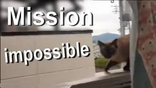 MISSION IMPOSSIBLE - PAROLE DE CHAT