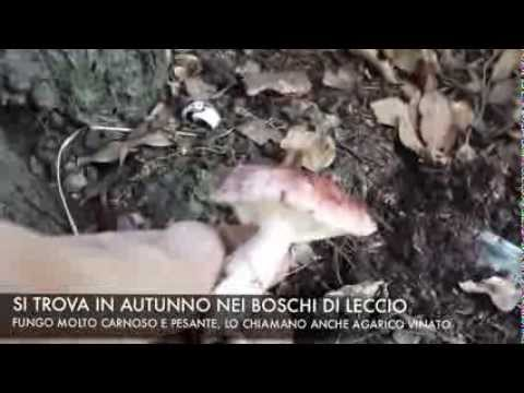 Genere di un fungo di ununghia su una gamba