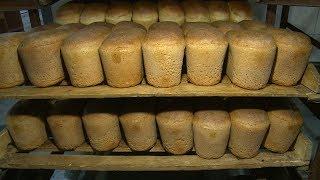 Волгоградские пекари высоко оценили качество зерна нового урожая