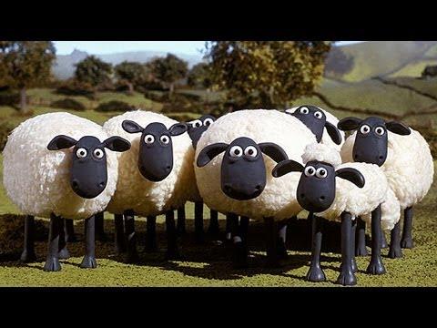 Schafe machen mähh auf Befehl