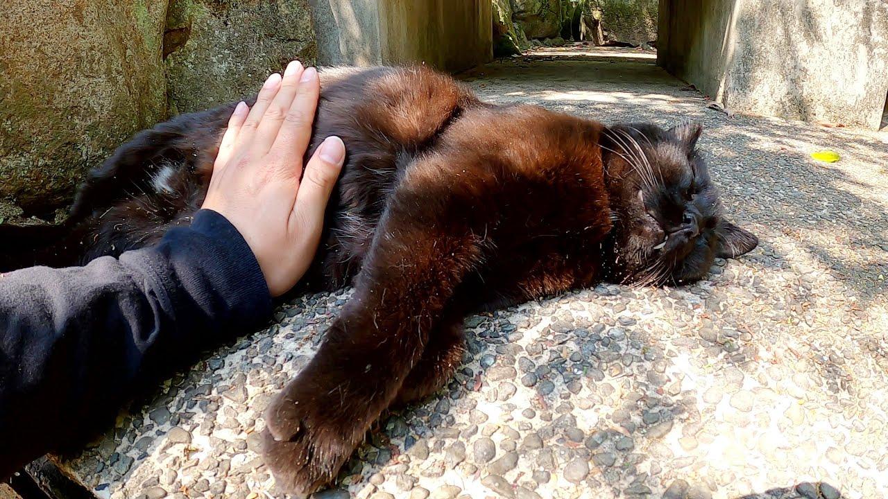 ぽっちゃり体型の黒猫とクリーム猫が庭園で爆睡する