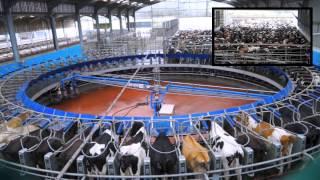 70 Point De-Laval Rotary Milking Parlour. Glenapp Farm Ayrshire.DairyCo. | Kholo.pk