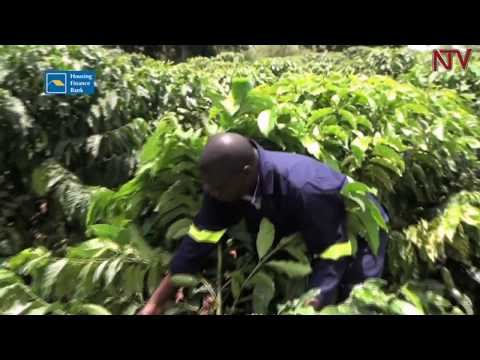 Uganda Development Bank to spend 190 Billion on commercial agriculture