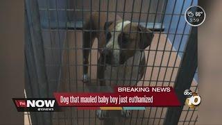 Dog that mauled baby boy just euthanized