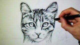 Dessiner un chat facilement videos - Dessiner un chat facilement ...