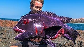 10 Most Unique Fish In The Ocean!