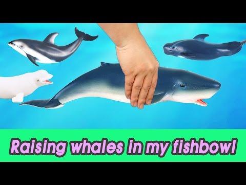 [EN] #50 Raising whales in my fishbowl! kids education, Collecta figureㅣCoCosToy