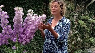 Flower Facts - Delphinium