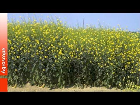 Les vernis du microorganisme végétal les rappels le prix