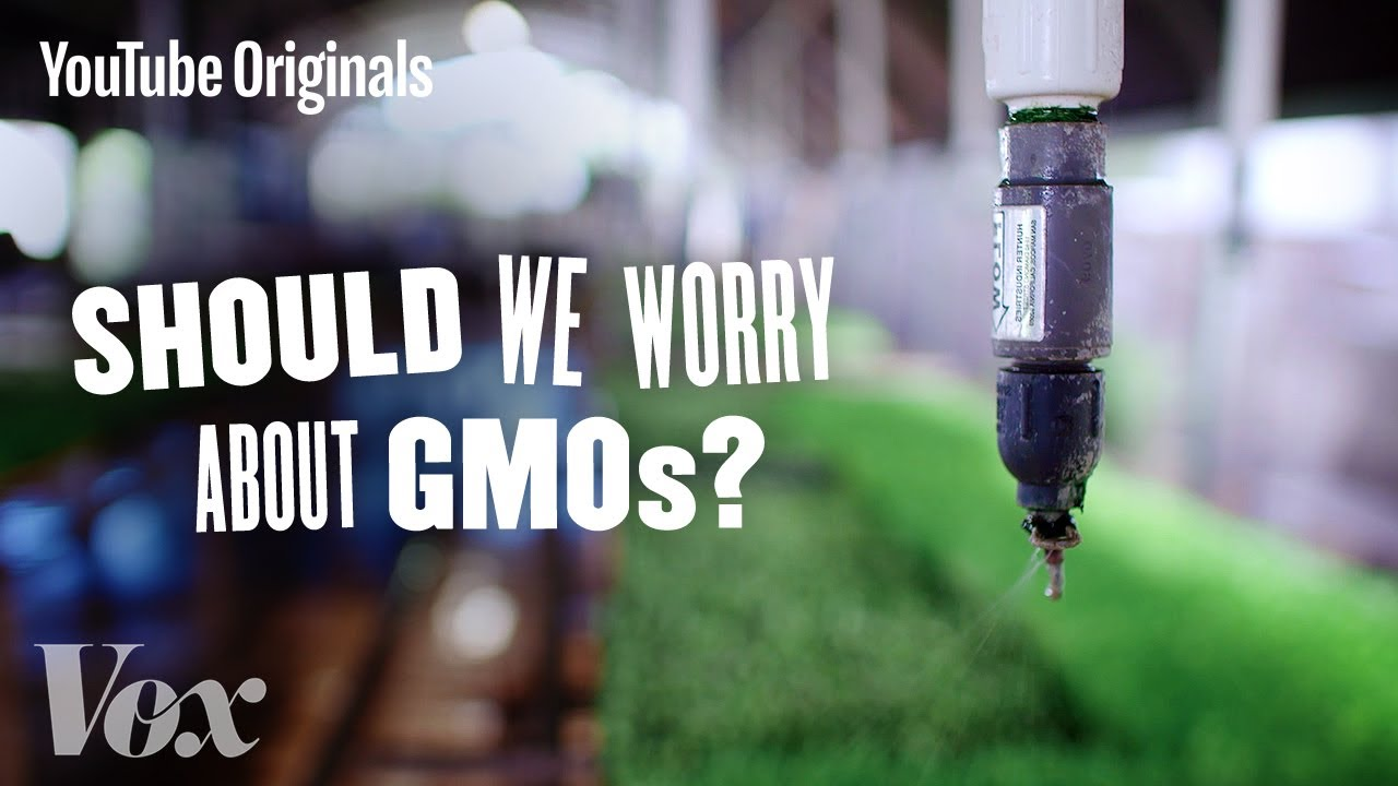 Should We Be Worried About GMOs? - Glad You Asked S1 thumbnail