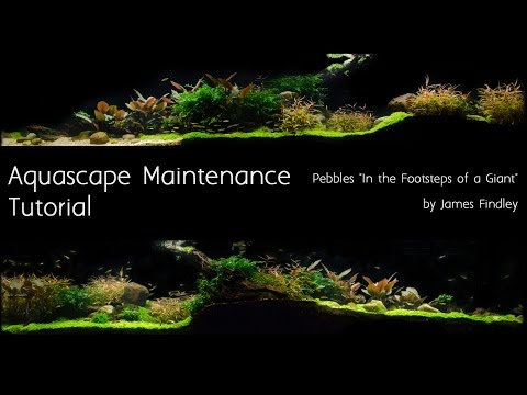 Aquascape Maintenance Tutorial Guide- The Green Machine