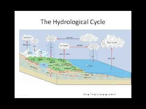 Ecology Basics for Landscapers and Designers   Sylvan Kaufman